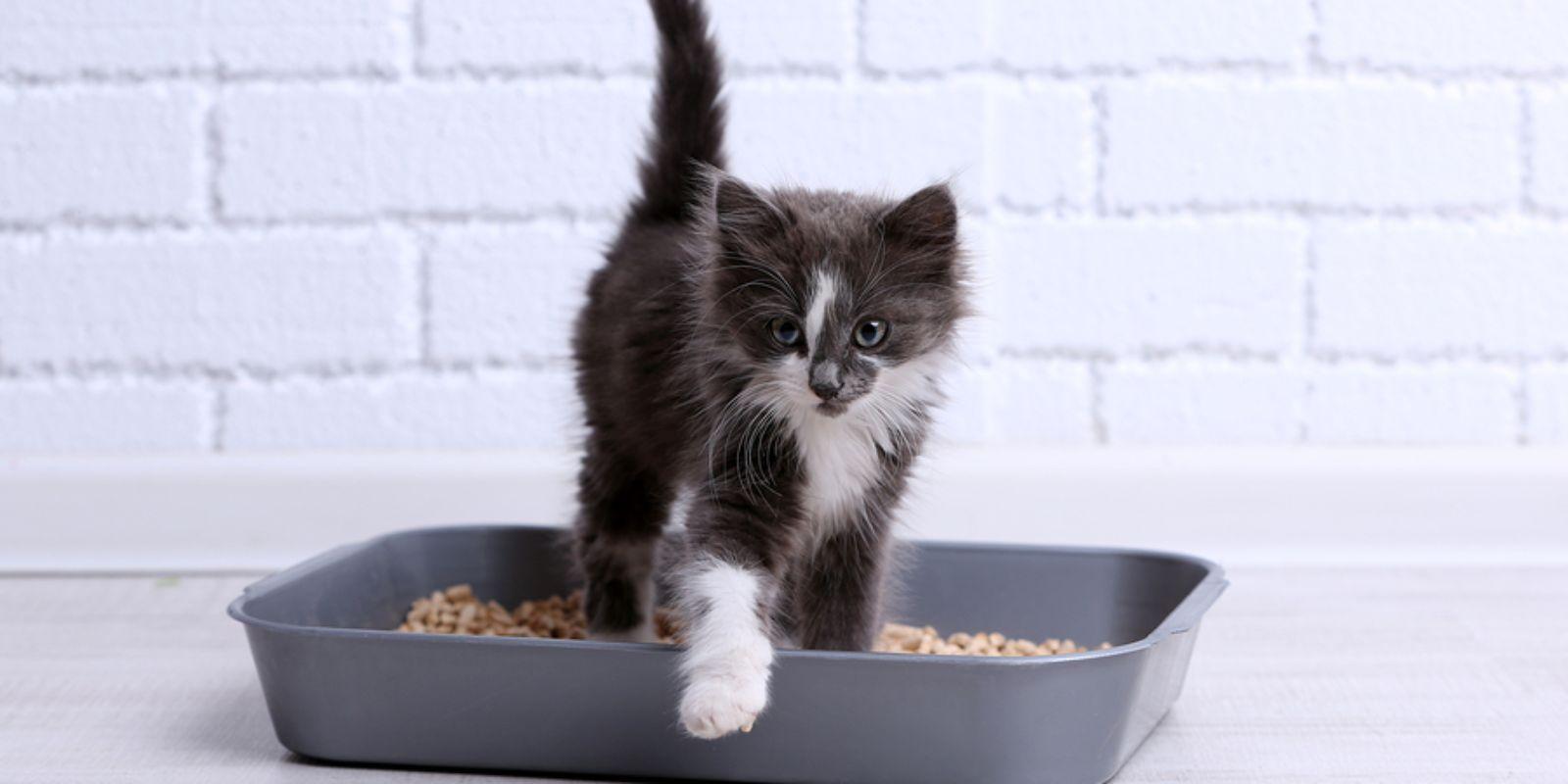 как отучить кошку срать в неположенном месте